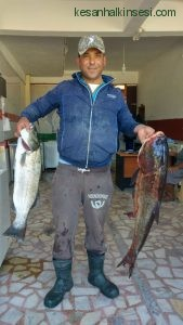 Enez balık (2)
